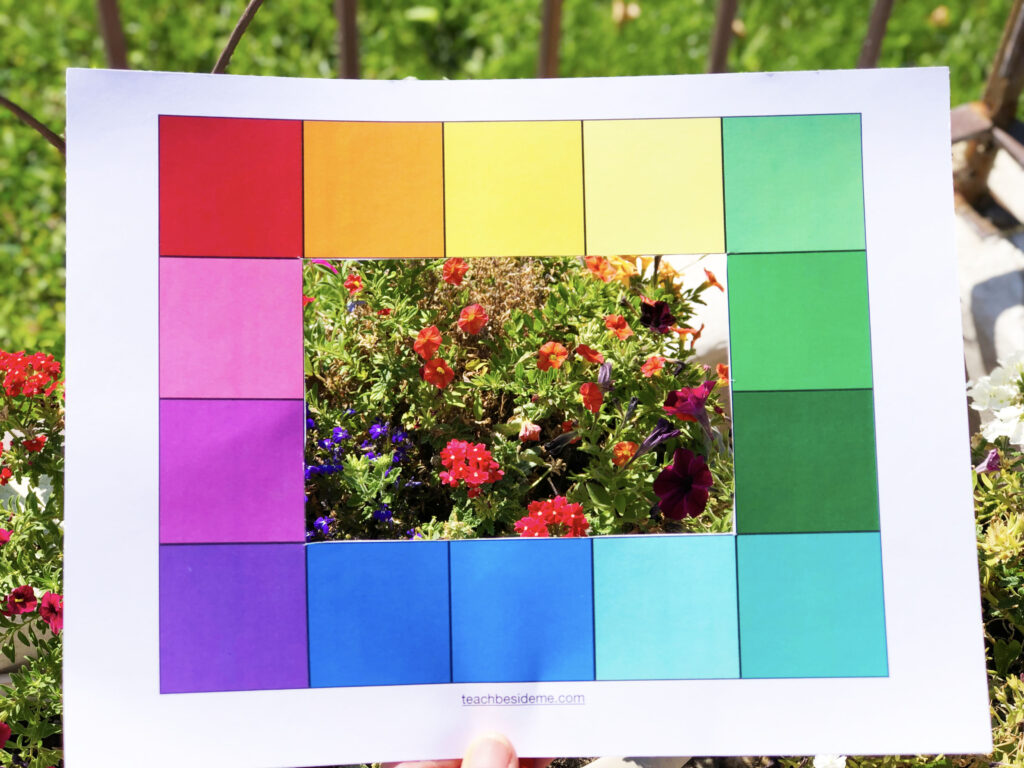 color hunt in nature