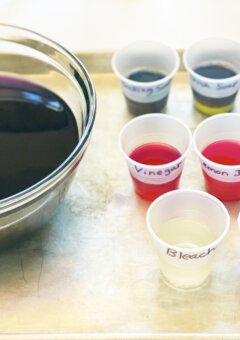 Acid Base Cabbage Juice Science Experiment