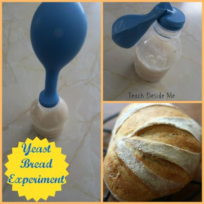 yeast bread dough experiment
