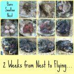 Summer Bird Nest Study