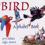 Storybook Art- Bird Alphabet Book & Craft
