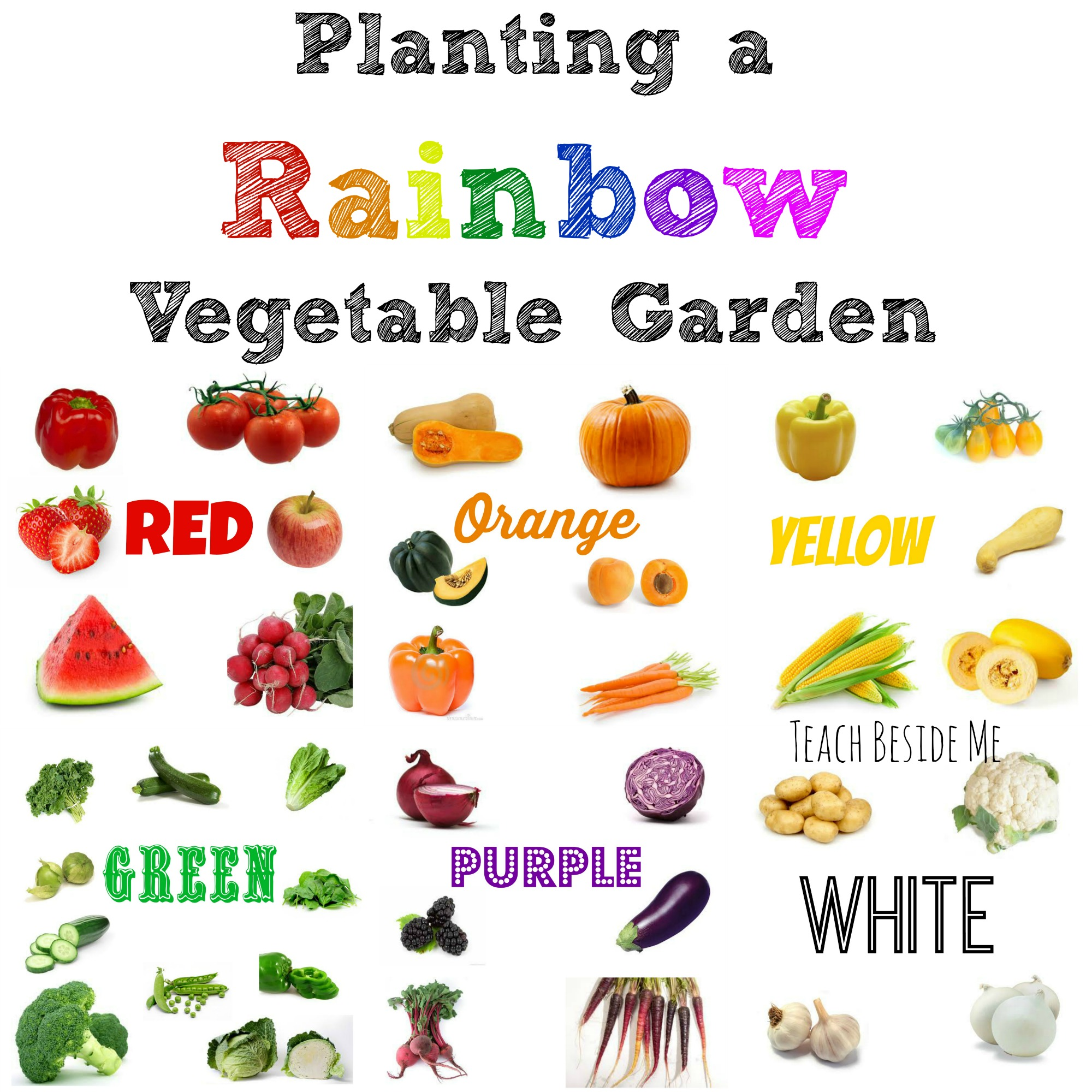 planting a rainbow vegetable garden teach beside me