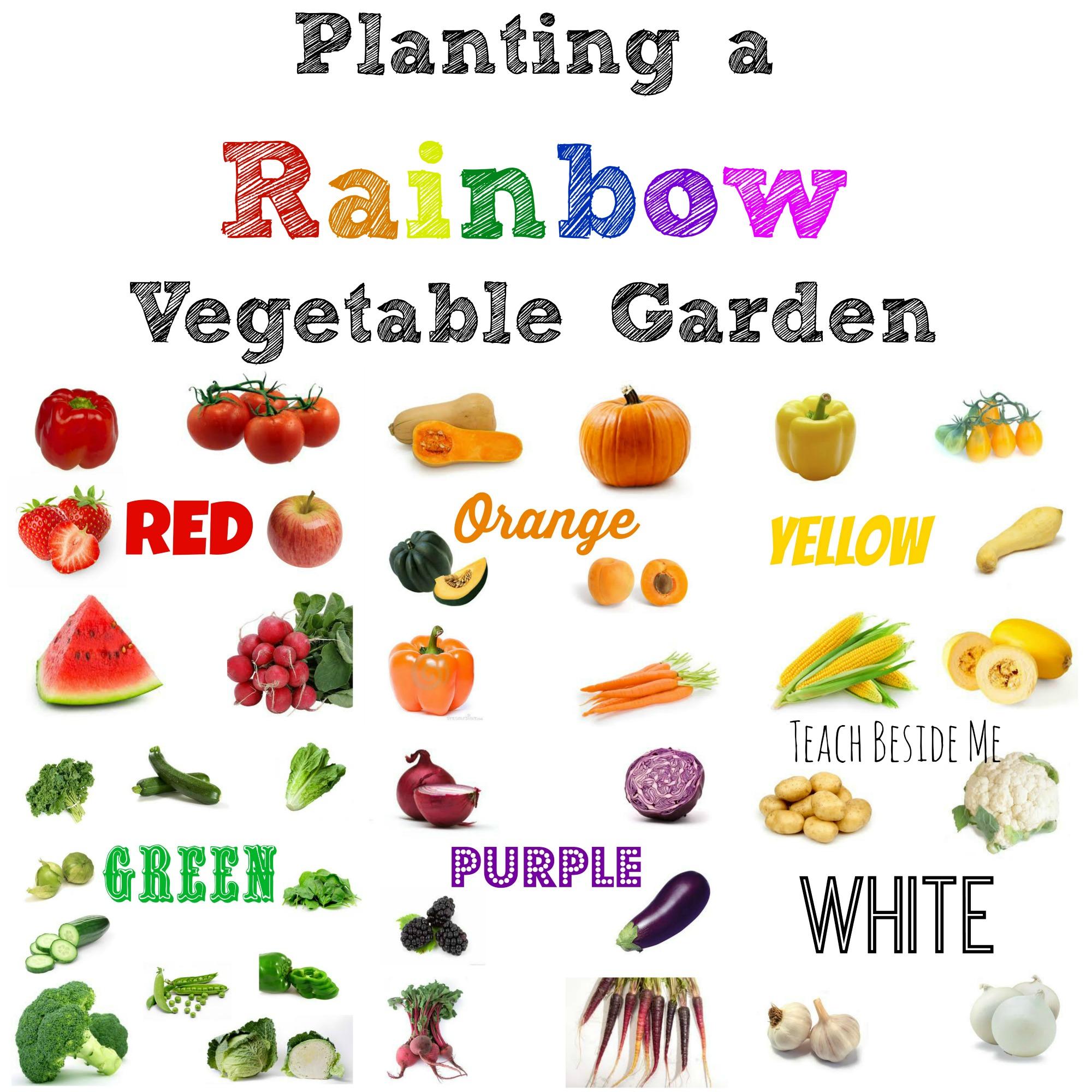 Planting a rainbow vegetable garden teach beside me for Fruit and vegetable garden