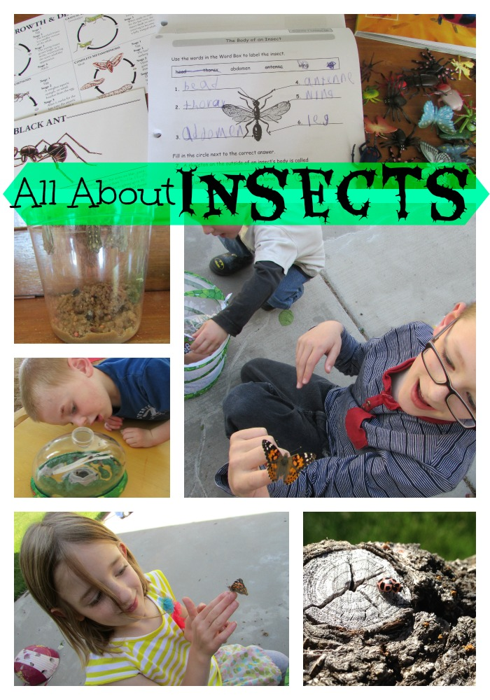 Spring Insect Study
