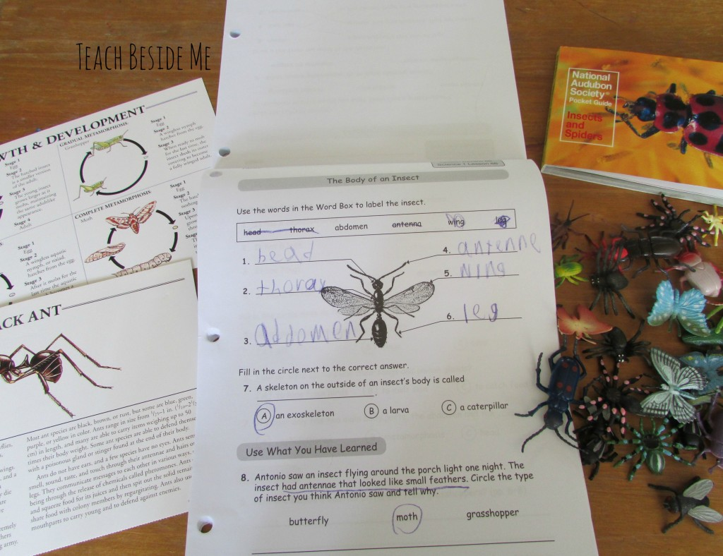 insect nature study