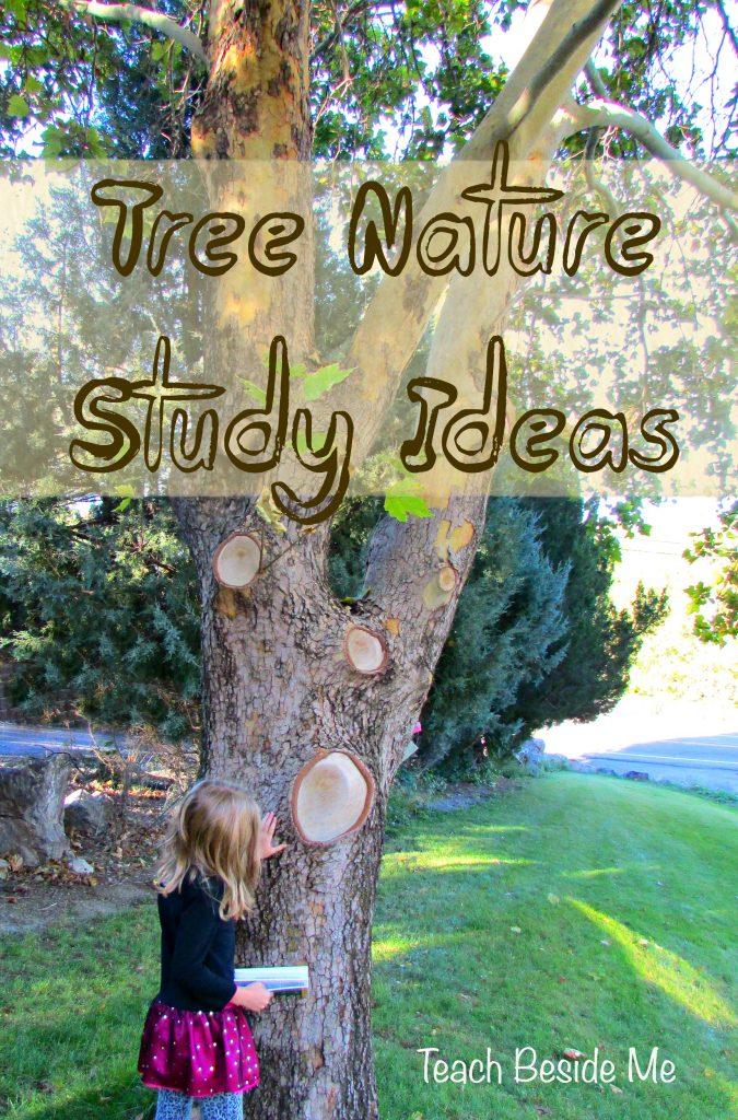 Tree Nature Study Ideas