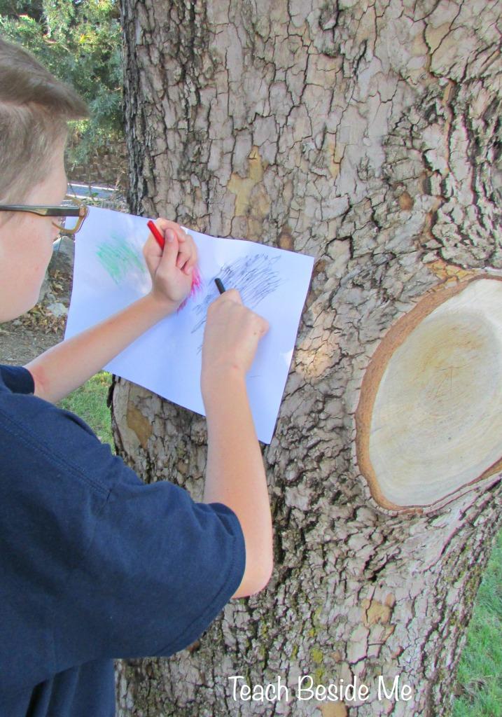 Tree Rubbings