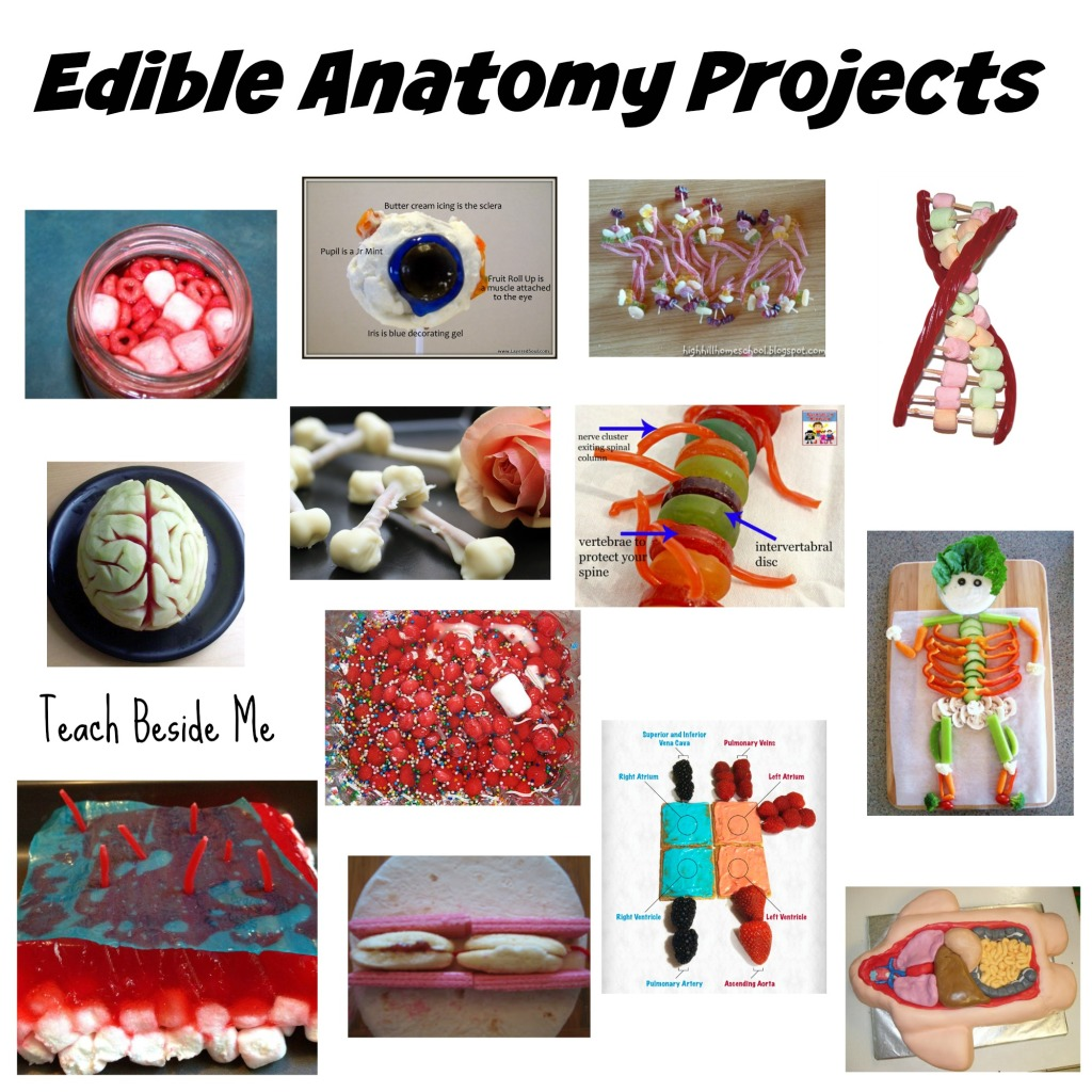 100 Edible Education Projects Teach Beside Me Anatomy