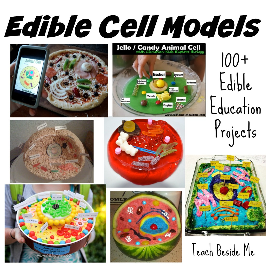 Edible Cell Models