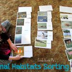 Animal Habitats Sorting Activity