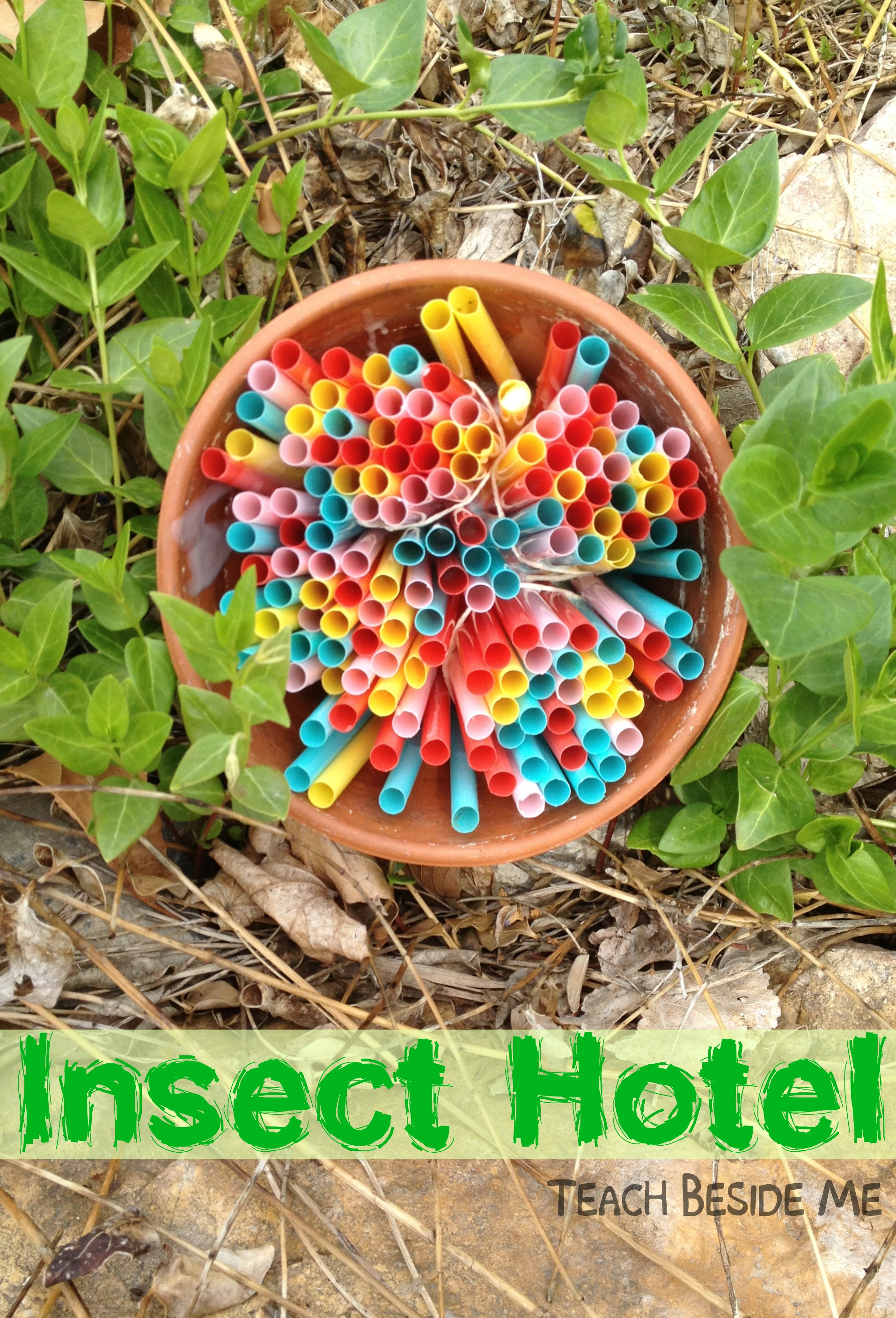 Insect Hotel: Nature Science