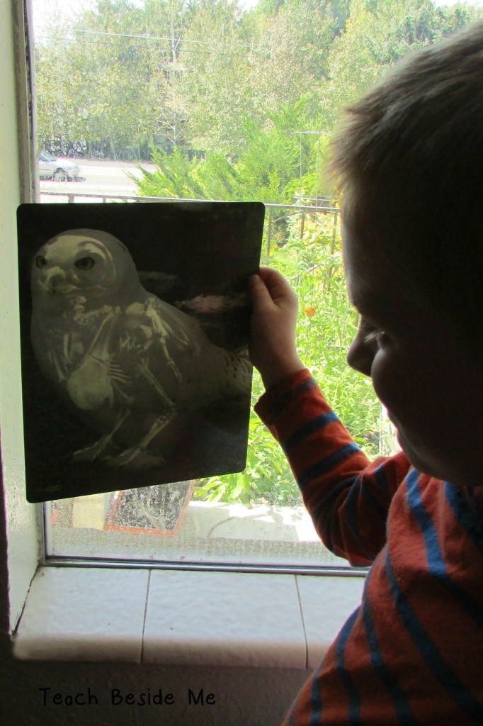 Animal Anatomy for Kids