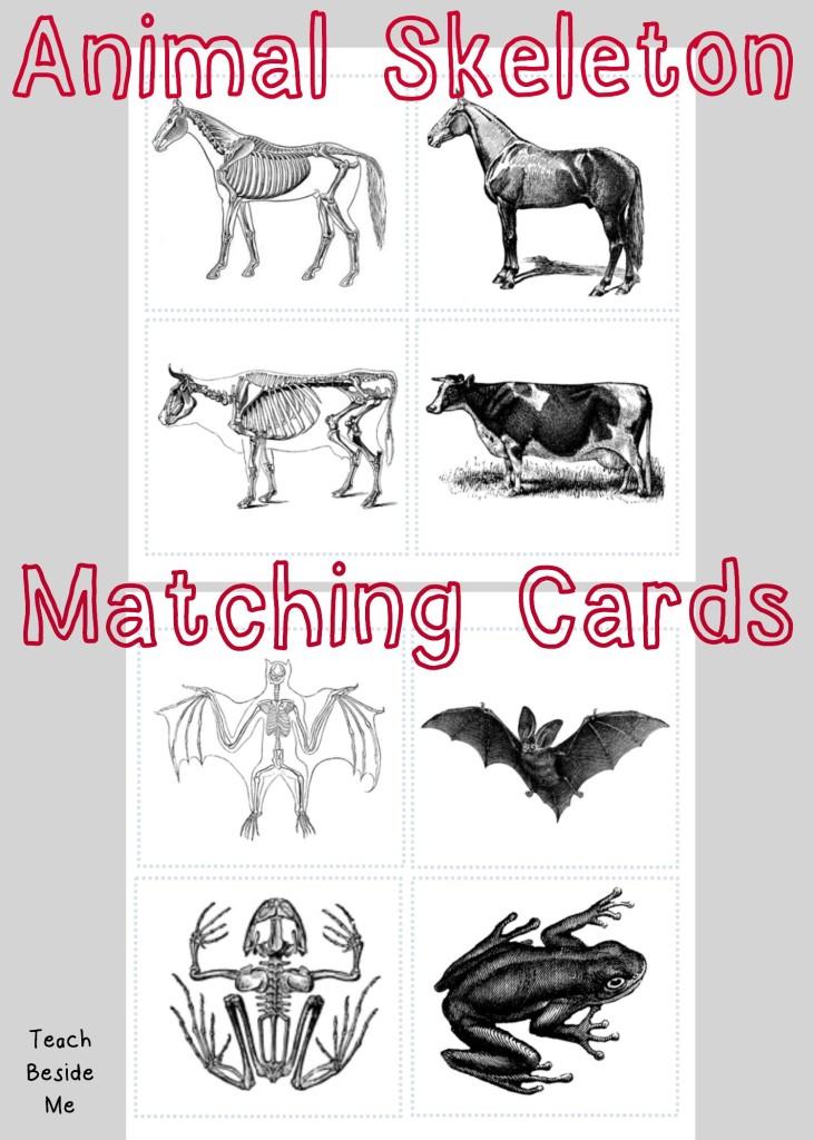Animal Skeleton Matching Cards Teach Beside Me