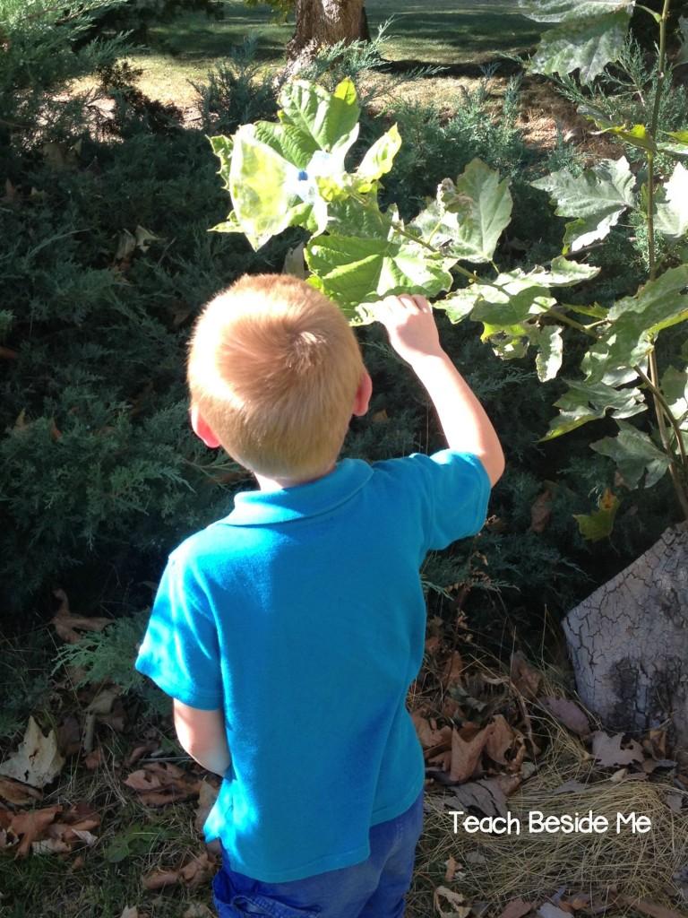 Leaf Transpiration