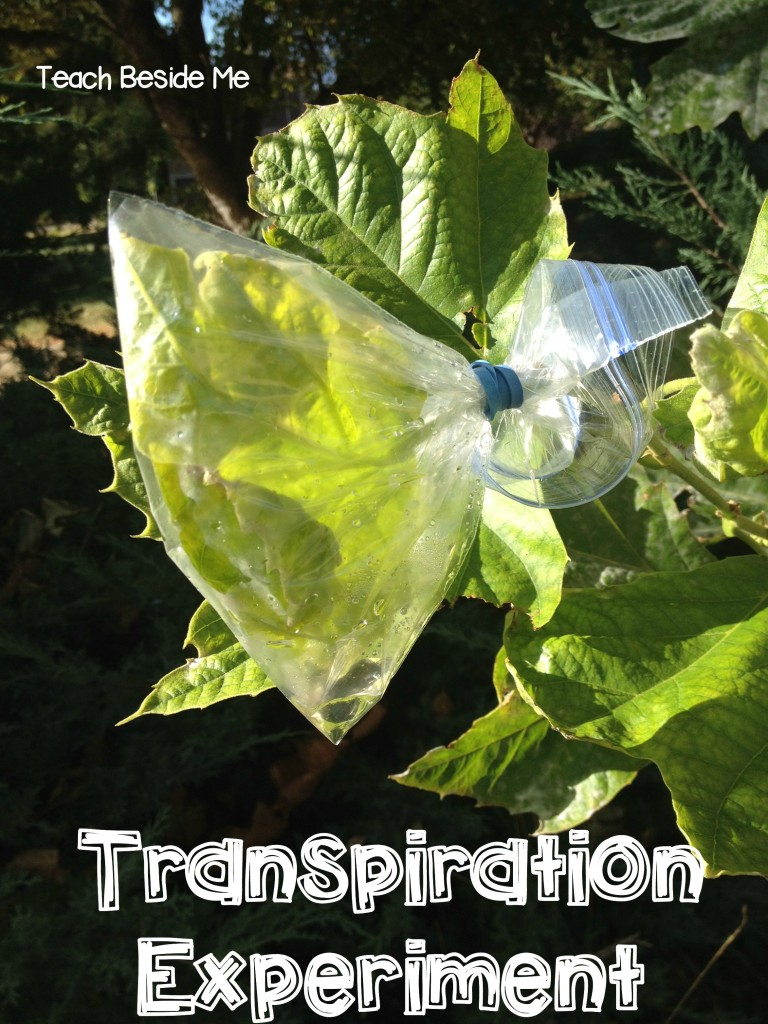 Transpiration experiment
