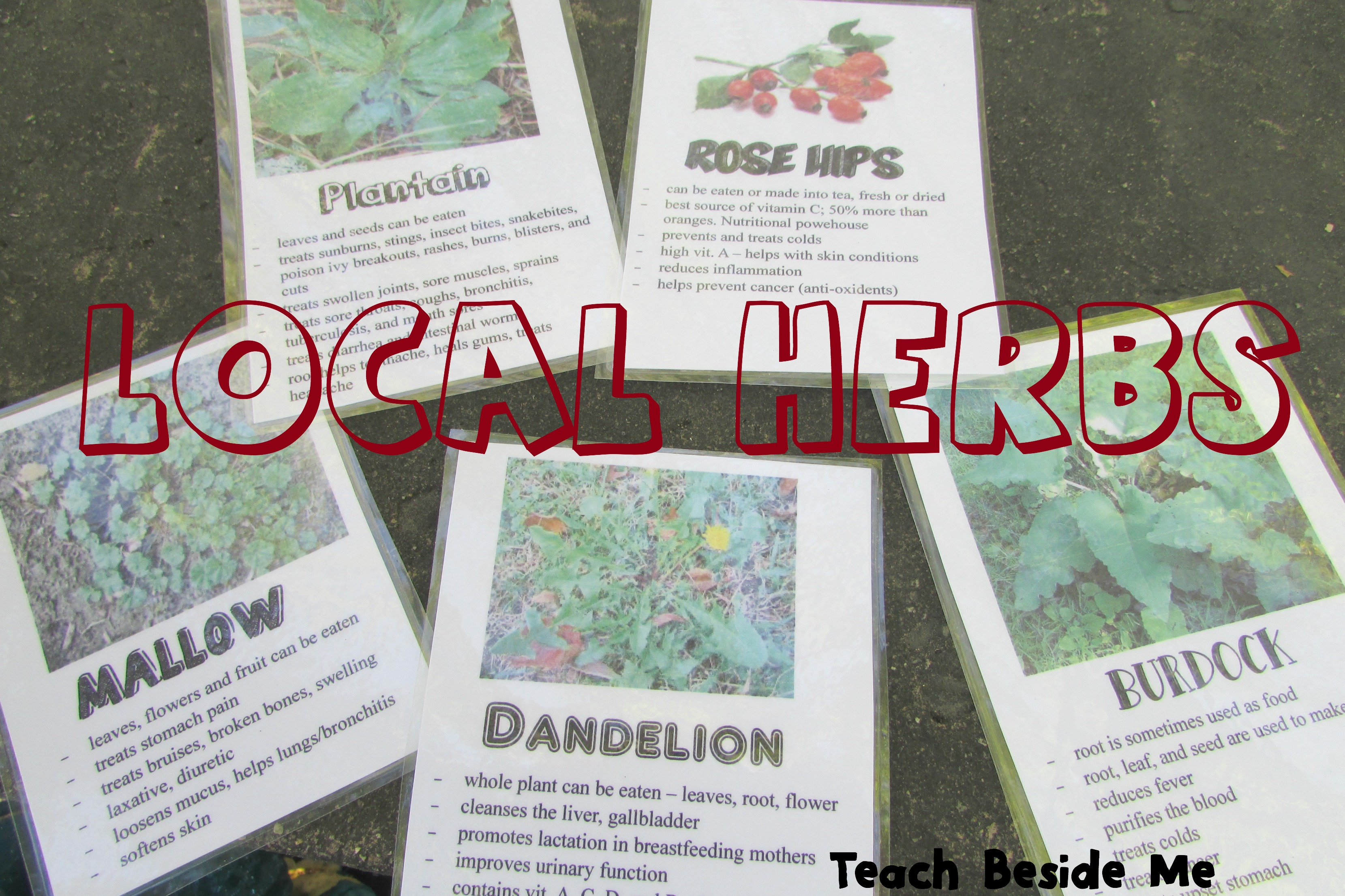 Learn your local herbs