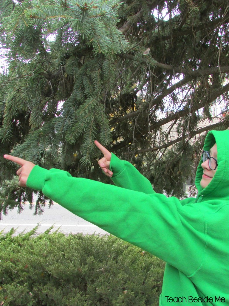 Evergreen nature study