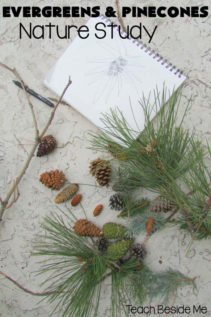 Evergreens & Pinecones Nature Study