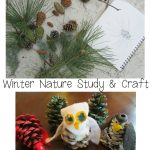 Evergreens & Pinecones (Nature Study & Craft)