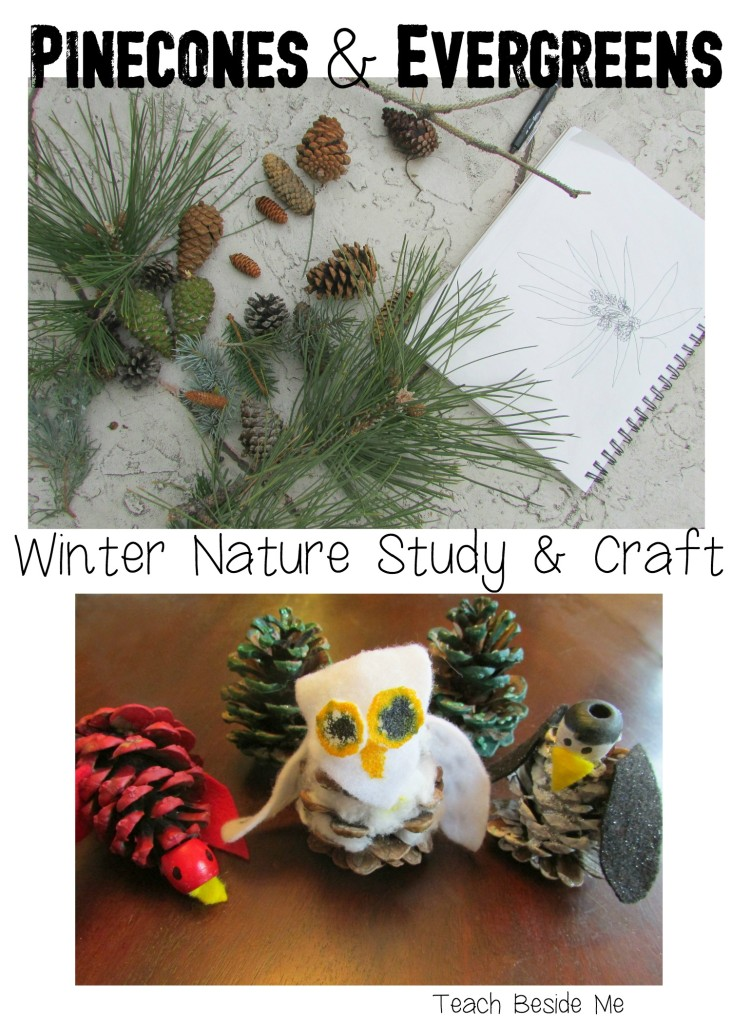 Pinecones & Evergreens- Winter Nature Study and craft