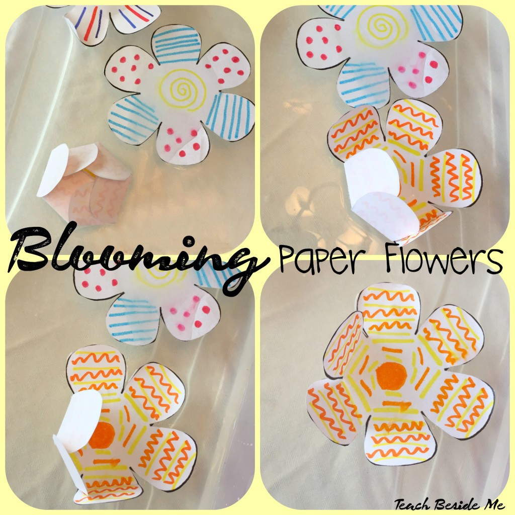 Blooming paper flowers experiment teach beside me blooming paper flowers in water mightylinksfo