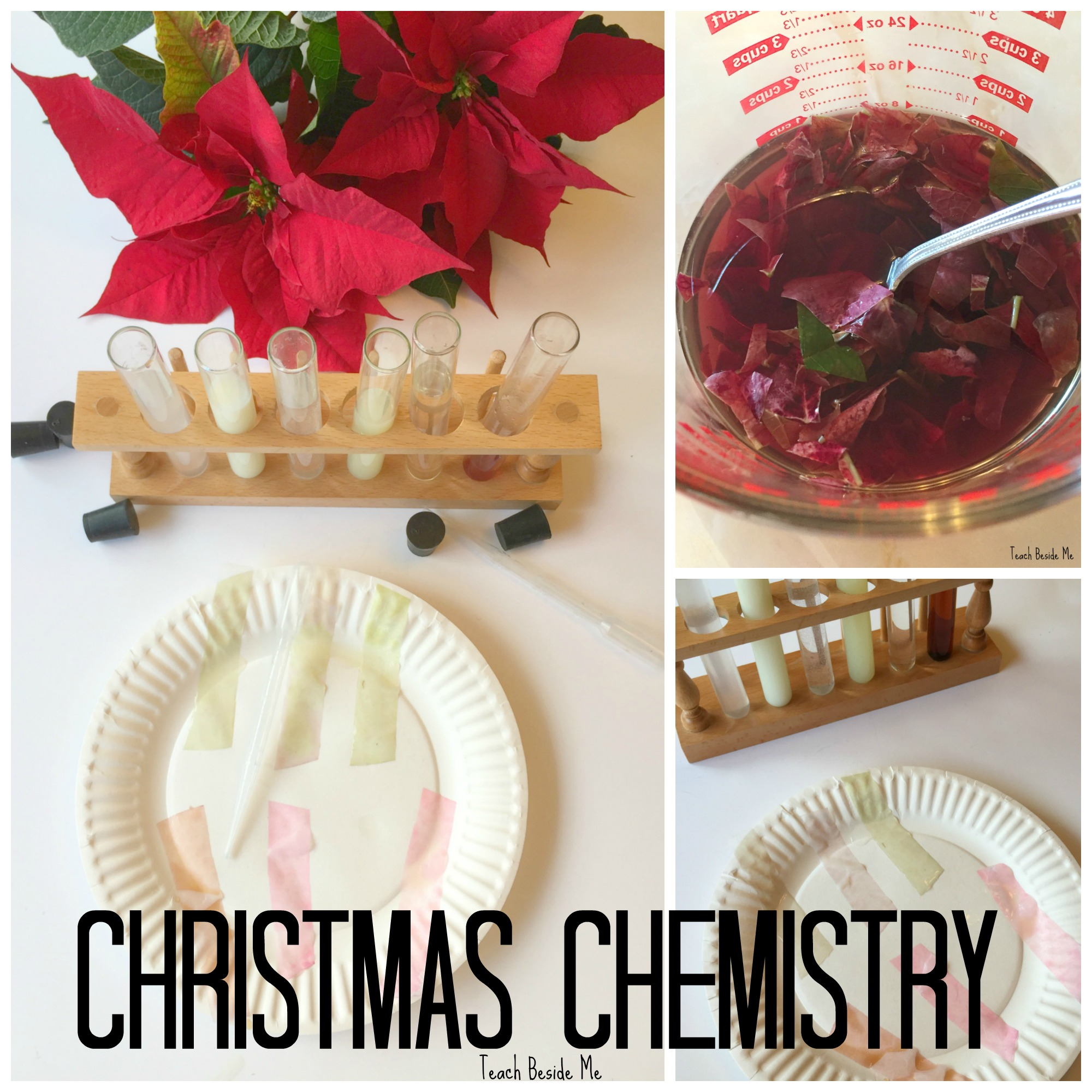 Christmas STEM: Poinsettia Ph Experiment