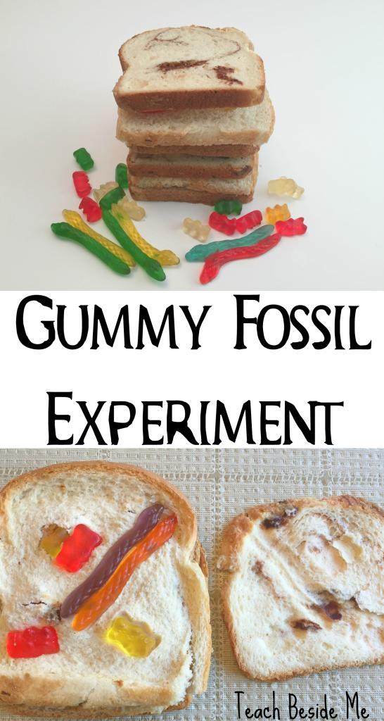 Gummy Fossil Experiment & Sedimentary Rocks
