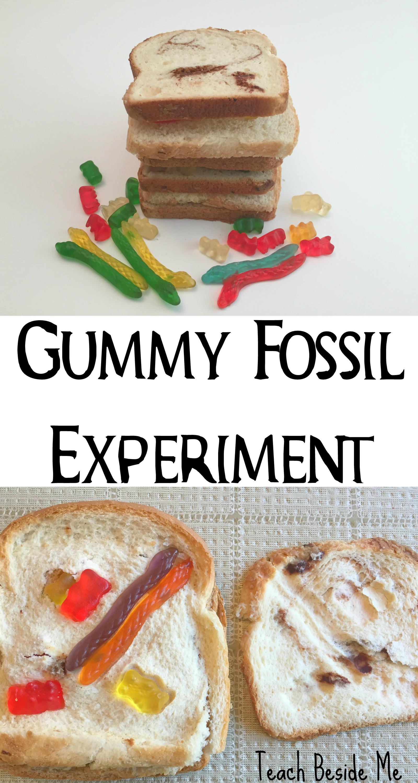 Sedimentary Rocks & Fossil Experiment
