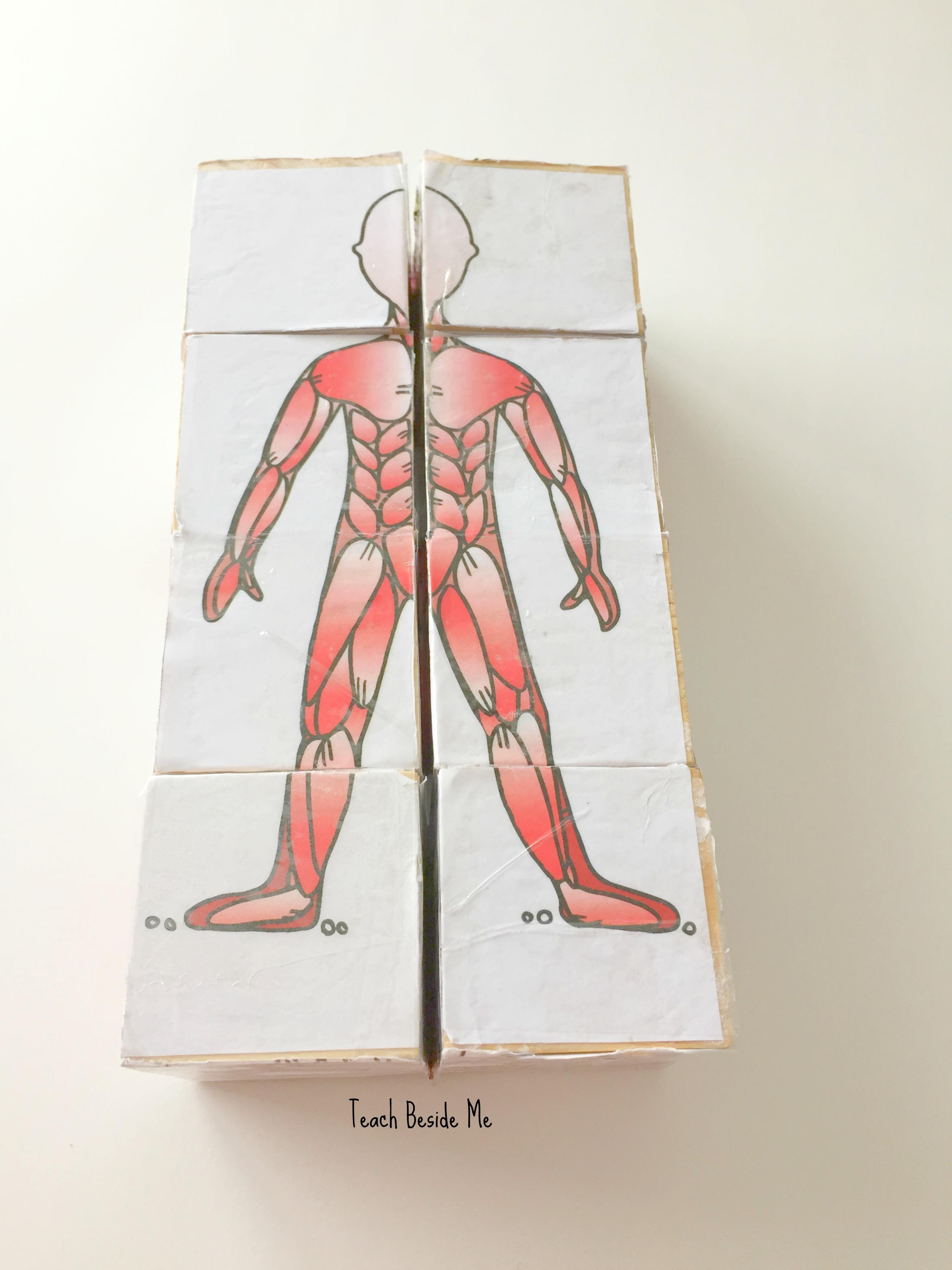 anatomy puzzle cube