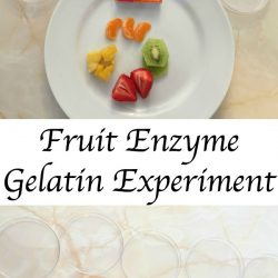 Fruit Enzymes Gelatin Experiment