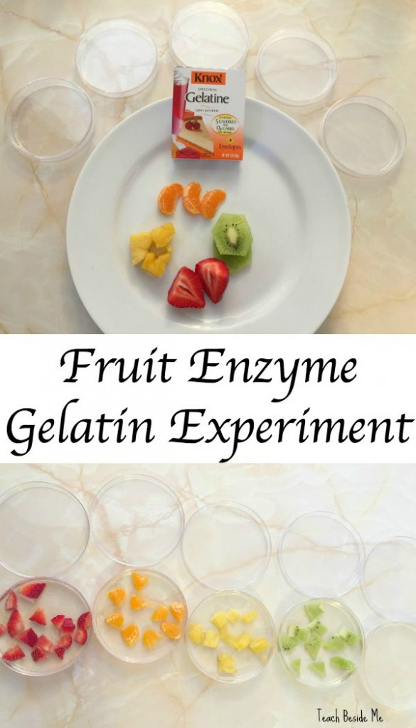 kitchen science project- gelatin fruit enzymes
