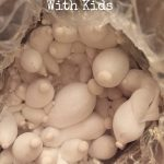 Nature Science: Growing Mushrooms With Kids