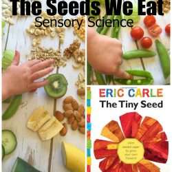 The Seeds We Eat- Nature Science