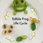 Edible Frog Life Cycle Snack
