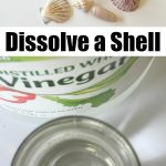 Seashell Acid Base Experiment