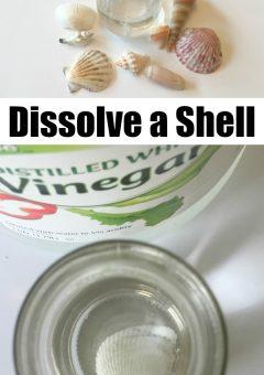 Seashell Acid Base Experiment
