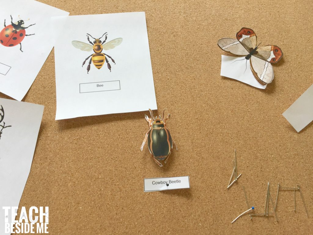 how to make a paper insect display