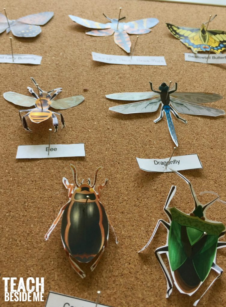 paper insect display