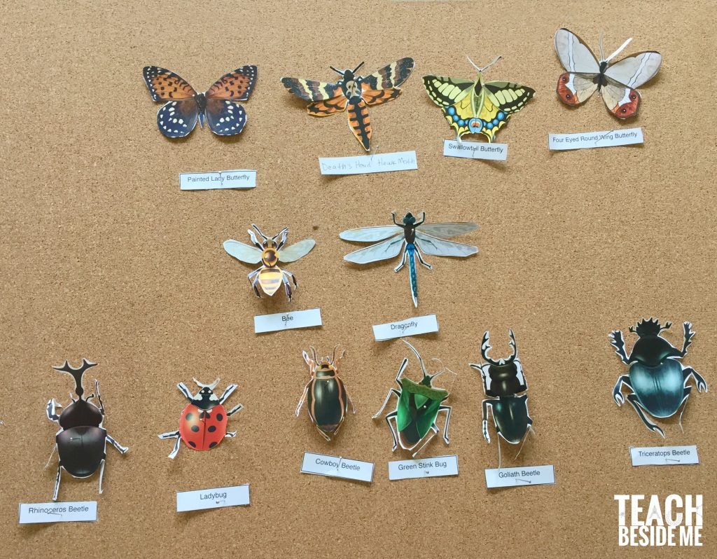 paper insect display for kids