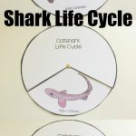 Shark Life Cycle Spinner