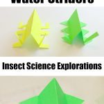 Water Striders: Insect Science