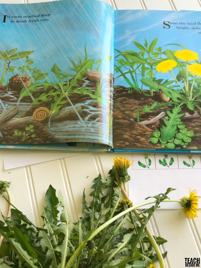 books about dandelions- wildflower nature study
