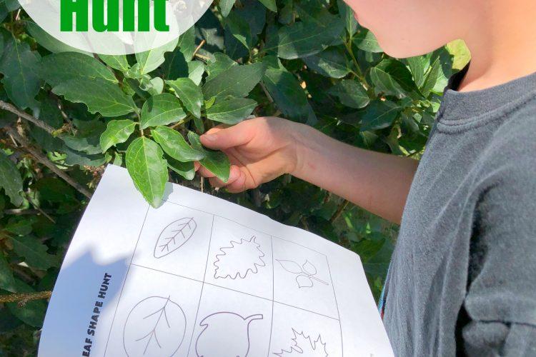 Leaf Shape Hunt
