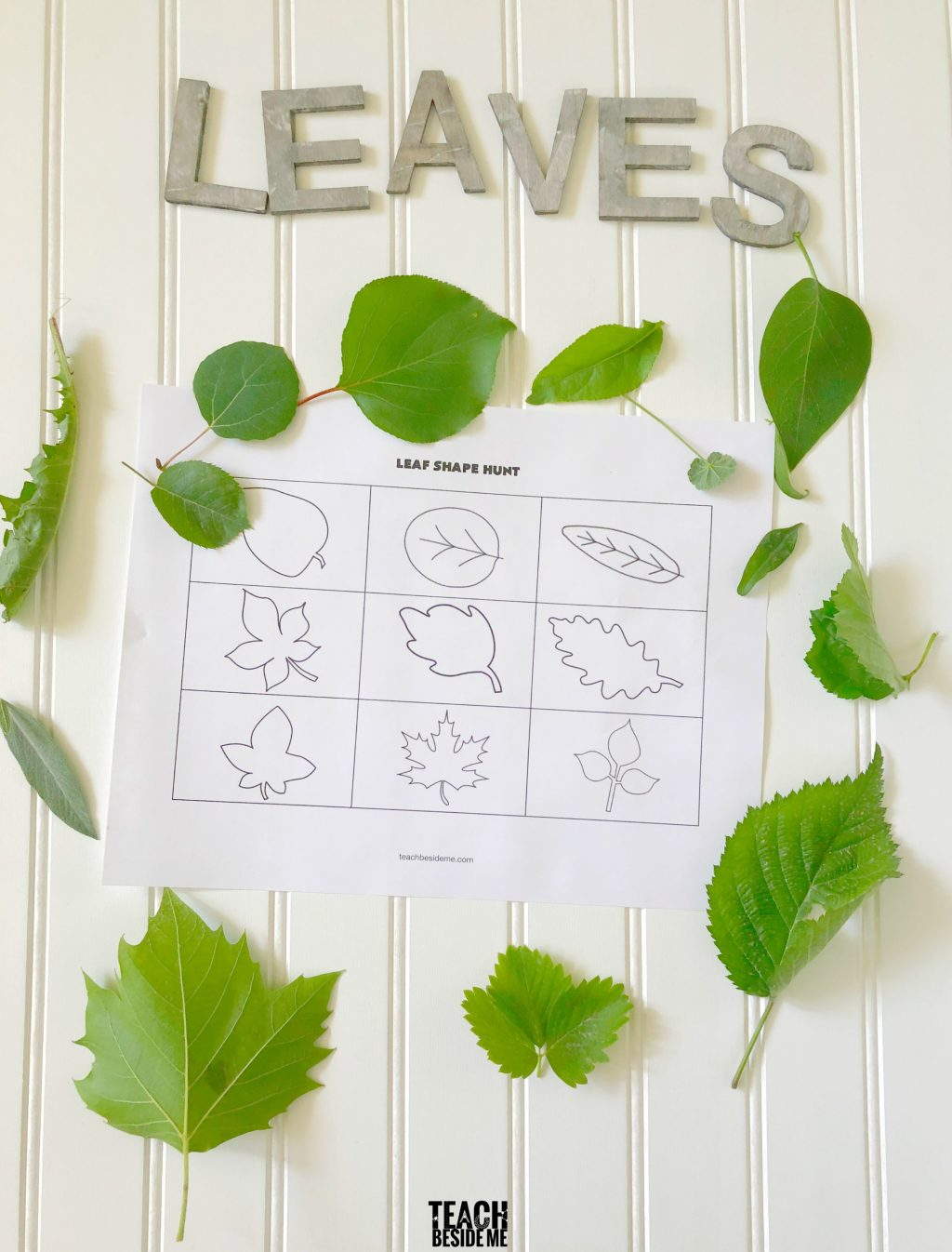 Leaf Shape Hunt printable