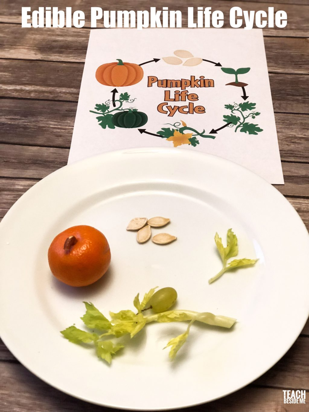 Edible Pumpkin Life Cycle