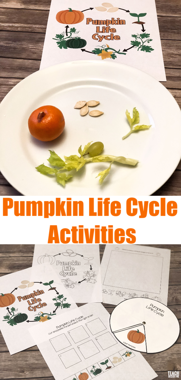 picture relating to Pumpkin Life Cycle Printable named Pumpkin Lifetime Cycle Actions Educate Beside Me