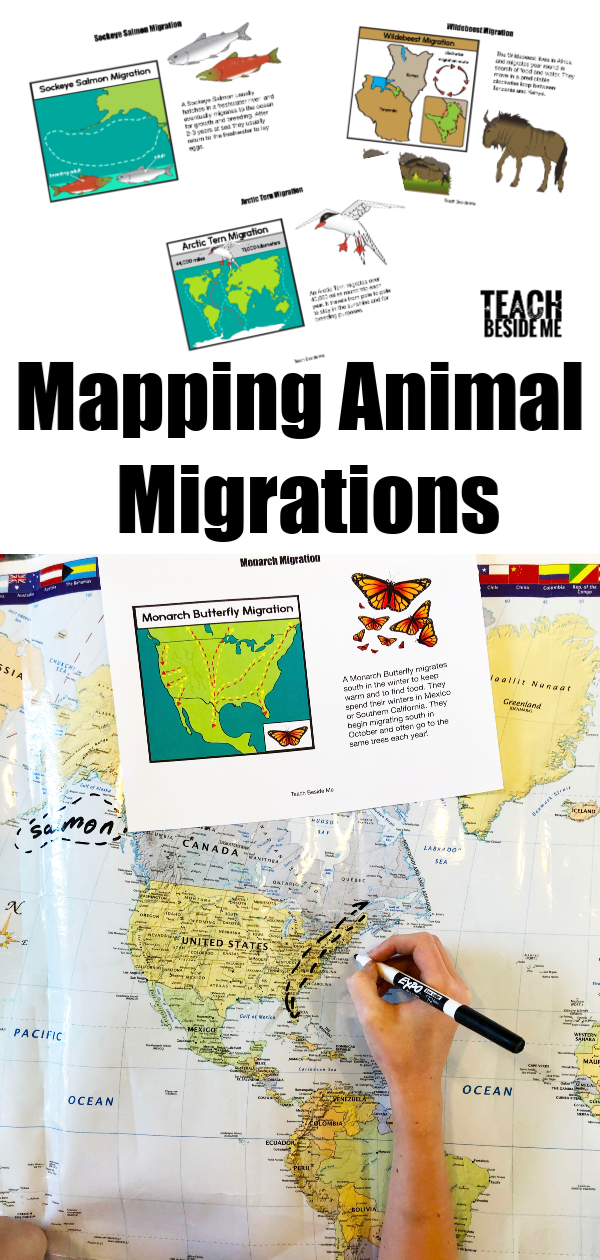 Mapping Animal Migrations