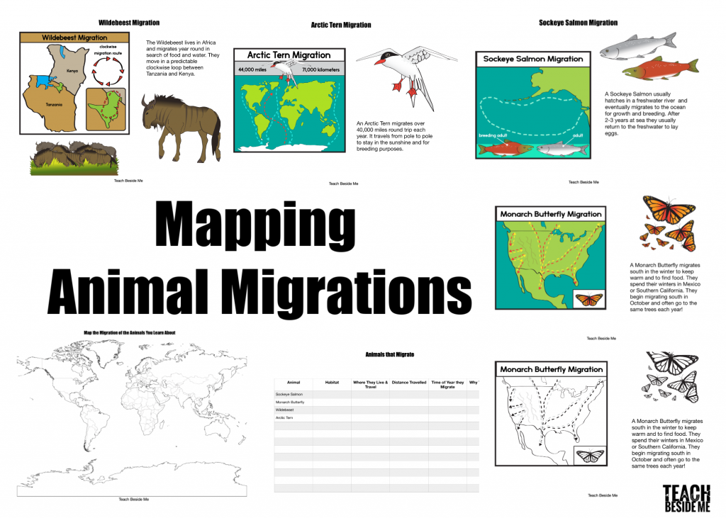 animal migrations pack