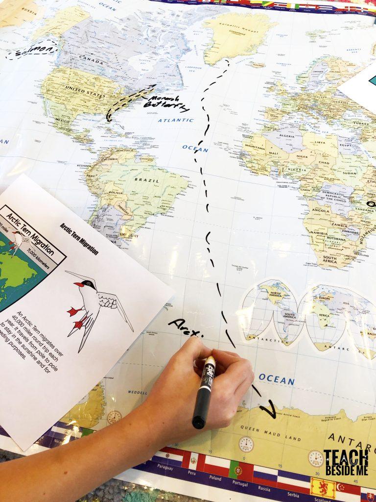 arctic tern migration path