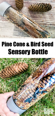 pine cone and bird seed sensory bottle
